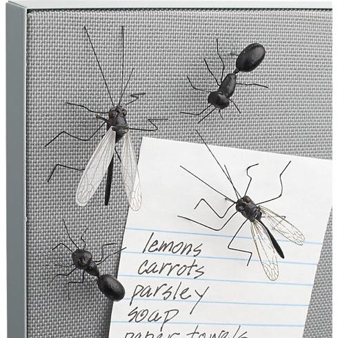 Insectpushpins03r
