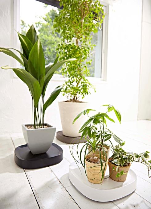 Plantable04